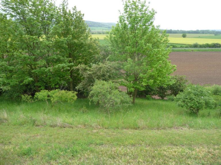 Agrarlandschaft (1)