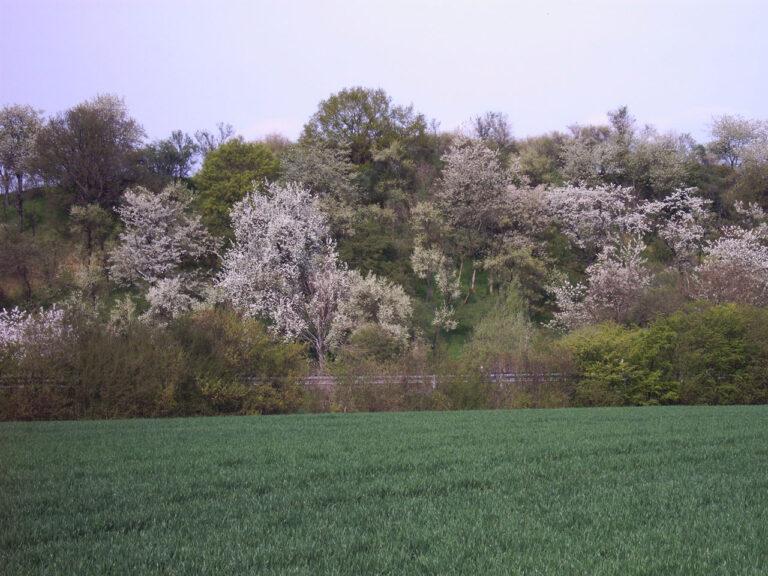 Agrarlandschaft (2)