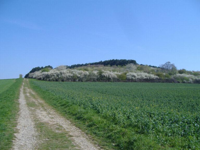 Agrarlandschaft (3)