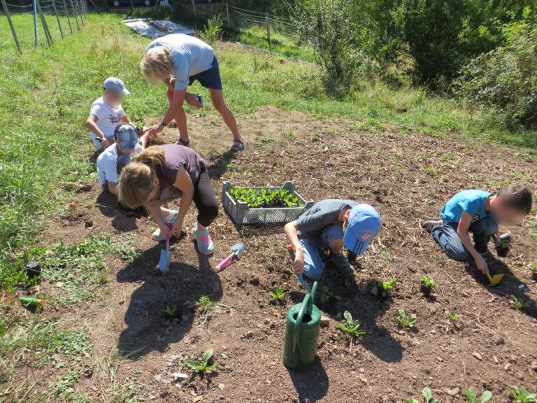 Einen Samen setzen und eine Idee verbreiten (6)